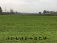 果嶺(ling)草