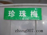 珍珠梅種子(zi)