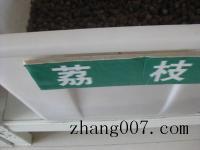 荔枝種子(zi)