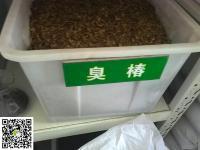 臭椿種子(zi)